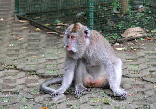 apina-2-monkey-forest
