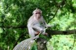 apina-monkey-forest-1