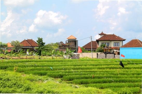 Riisipeltoa ja rakennuksia.