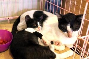 Emo ja poika Gili Menon saarella kissaheräämössä.