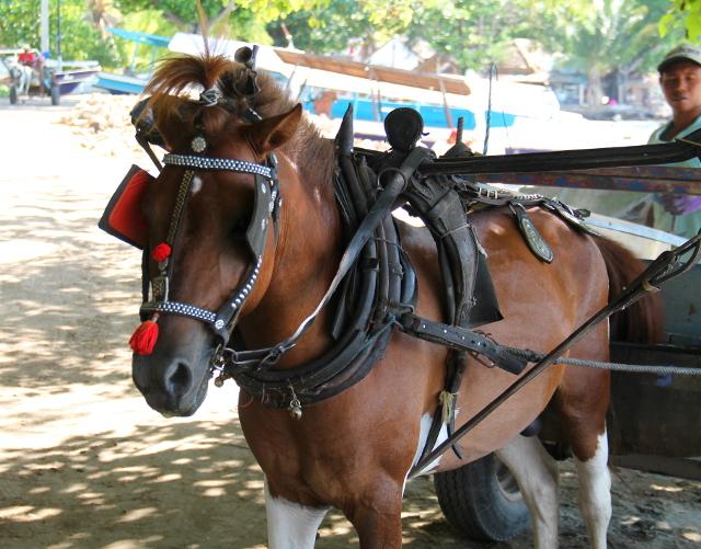 hevonen-gili-airilla