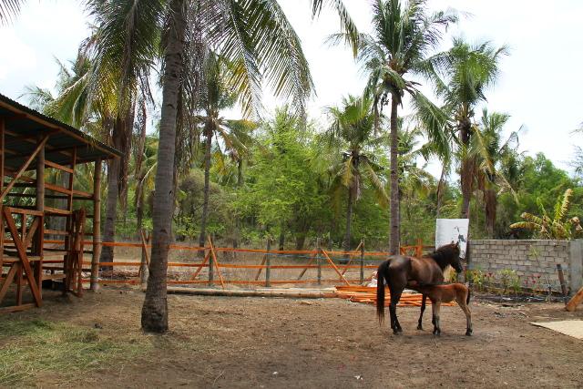 Hevoset Lutwalan takana.