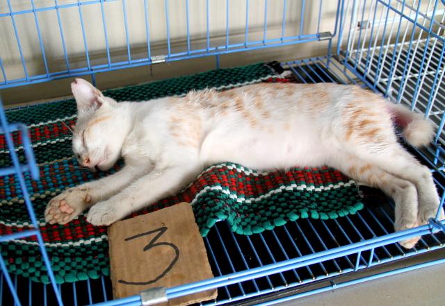 kissa-heraamossa-menolla
