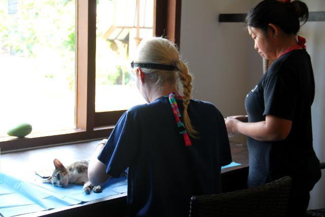 Eläinlääkärit työssä Oceans 5 -sukelluskeskuksen klinikaksi ja heräämöksi muunnetussa luokkahuoneessa.