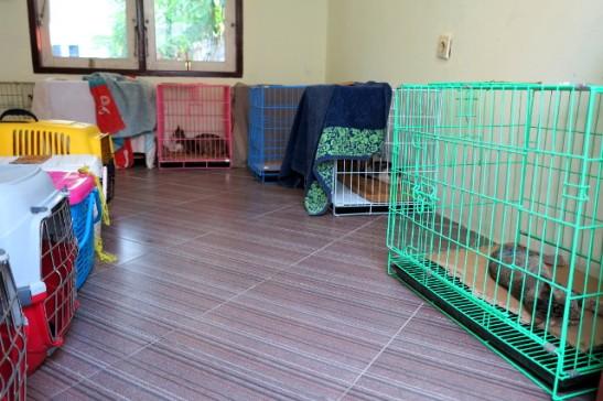 Kissojen heräämö Gili Trawanganilla. Siellä piti vuokrata kissakaupan takana olevasta guest housesta huone tätä varten.