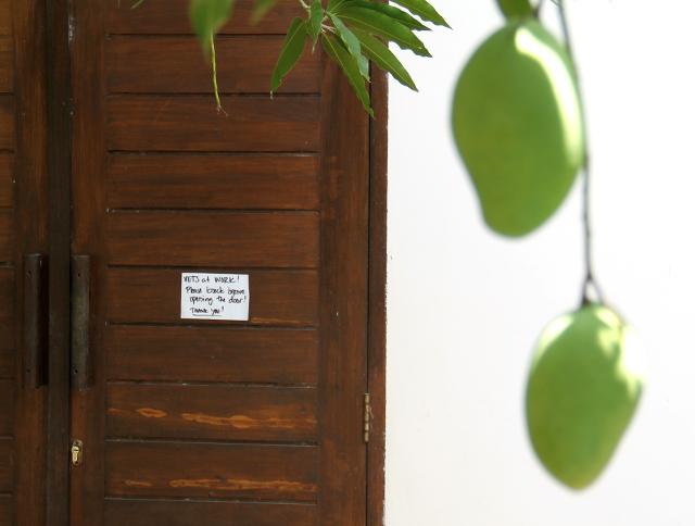 Klinikan ovi ja puusta roikkuvat mangot, joita piti väistellä liikkuessa klinikalle ja takaisin.