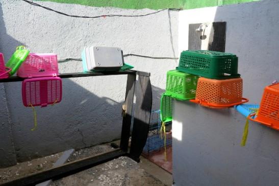 Vapaaehtoisten hommiin kuului paljon putsaamista. Tässä pesty muovikoreja, joita käytettiin kissojen kuljettamiseen sekä pari häkkiä.