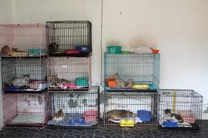 Lutwalan kissasairaala on pieni huone, mutta parempi kuin ei mitään.