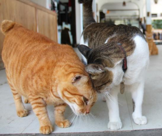 lutwalan-kissat-puskevat