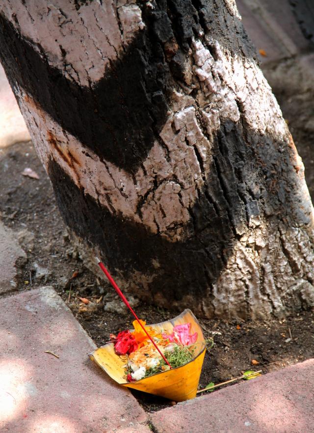 Puuhun on maalattu jonkinlainen henkiin liittyvä kuvio ja juurella on uhrilahja, joita on Balilla vähän joka rakennuksen edessä.