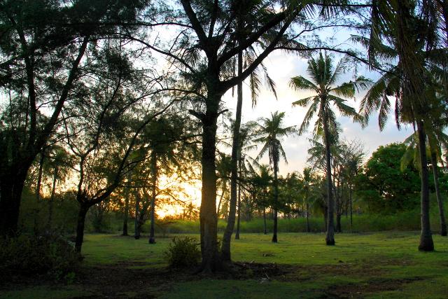 Mao Menon edessä oli kaunis palmuinen alue.