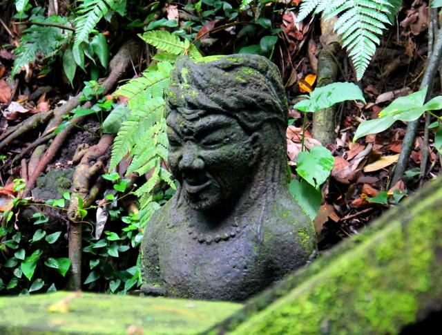 patsas-monkey-forestissa