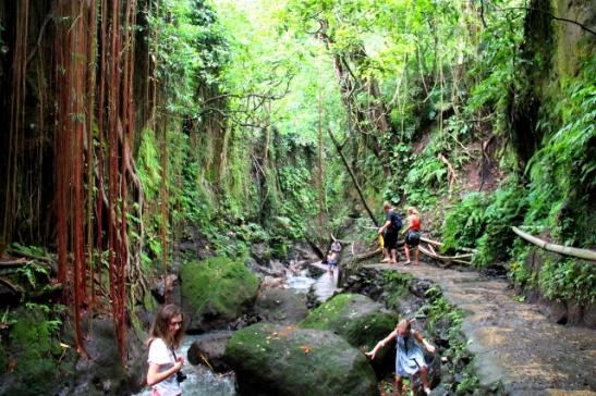 polku-monkey-forestissa