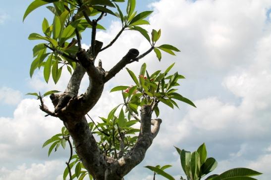 puu-resortin-edessa