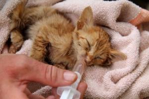 Kuva sairaasta pennusta, josta kukaan ei halua pitää huolta, pitäisi riittää kertomaan, miksi kissat pitää steriloida.