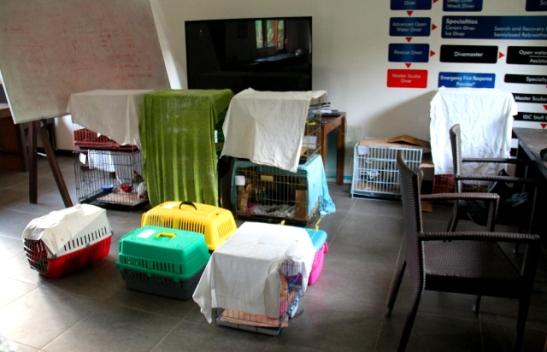 Heräämö viimeisenä aamuna. Tässä lähdettiin enää palauttamaan loput edellisenä päivänä leikatuista kissoista takaisin sinne, mistä ne oli löydetty ja sitten siivottiin ja pakattiin.