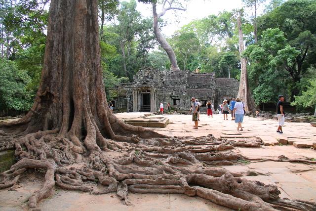 Ison puun juuret ennen Ta Prohmin sisäänkäyntiä.