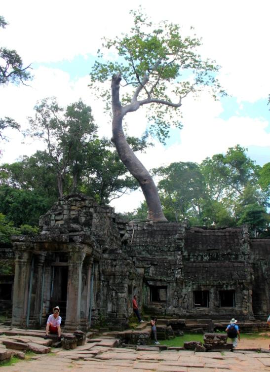 puu-kasvaa-temppelista