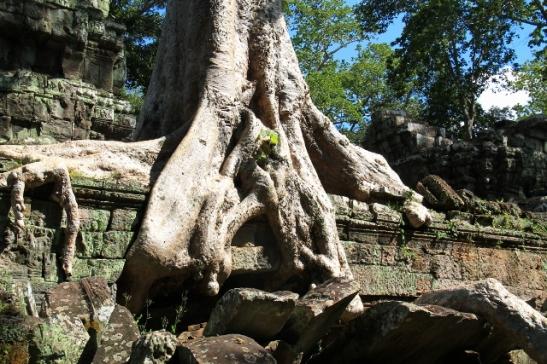 puun-juuret-raunion-paalla