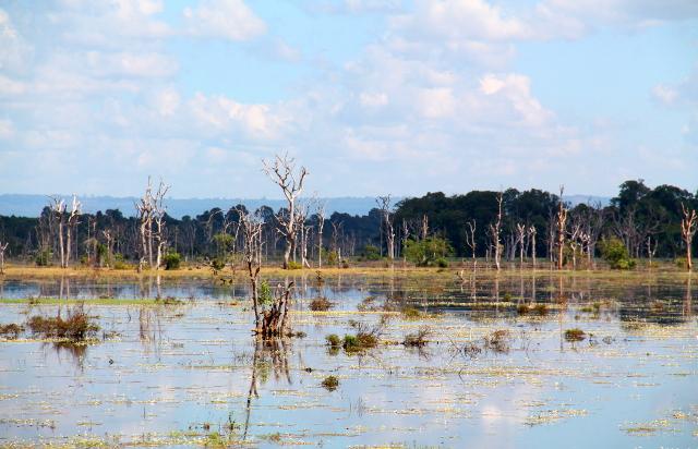 Vedessä on hienon näköisiä kuihtuneita puita.