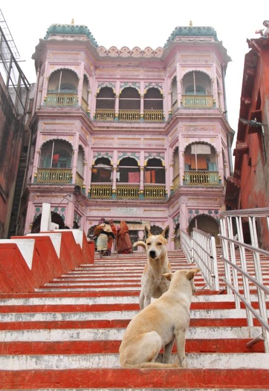 dogs-on-stairs-varanasi