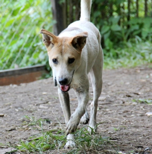 Silloin jos laiskottaa lähteä koiratarhalle, niin pitää vain ajatella Grapea ja muita koiria, jotka kovasti haluaisivat päästä kävelylle ja koirapuistoon. Greippi tässä kuvassa on lempikoirani tarhalla.