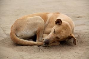 koira-hiekkakasassa