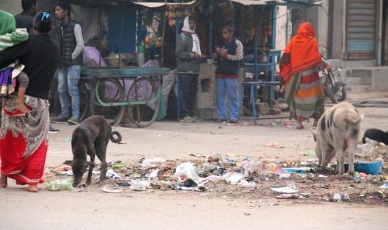 Koira ja possu kadulla tonkimassa roskia.