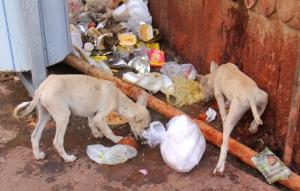 Intian surullisiin ja epämiellyttäviin puoliin on syynä yleensä köyhyys, köyhyys ja vielä kerran köyhyys.
