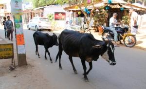 Toisaalta Goa on edelleen niin erilainen, että ehkä se on edelleen enemmän seikkailu, vaikka siellä toistuvasti kävisikin.