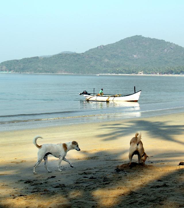 Kaksi Lucky-nimistä koiraa Palolemin rannalla. Voisivat ehkä keksiä vähän enemmän nimiä.