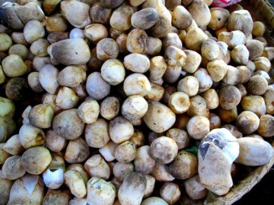 Olkisieniä myynnissä torilla. Olkisienet ovat umpioita palleroita ja klassisemman sienen näköinen muoto löytyy uloimman kerroksen sisältä. Nam.