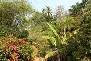 Näkymä Sevasin puutarhaan. Vuosia sitten, kun kasvusto oli vaatimattomampaa, tuolla oli aika kuuma olla. Nyt puutarhaa oli sopivasti. Toisella puolella polkua taas on äärimmäisen pöheikköinen Bhakti Kutir, joka on ehkä liiankin varjostunut.