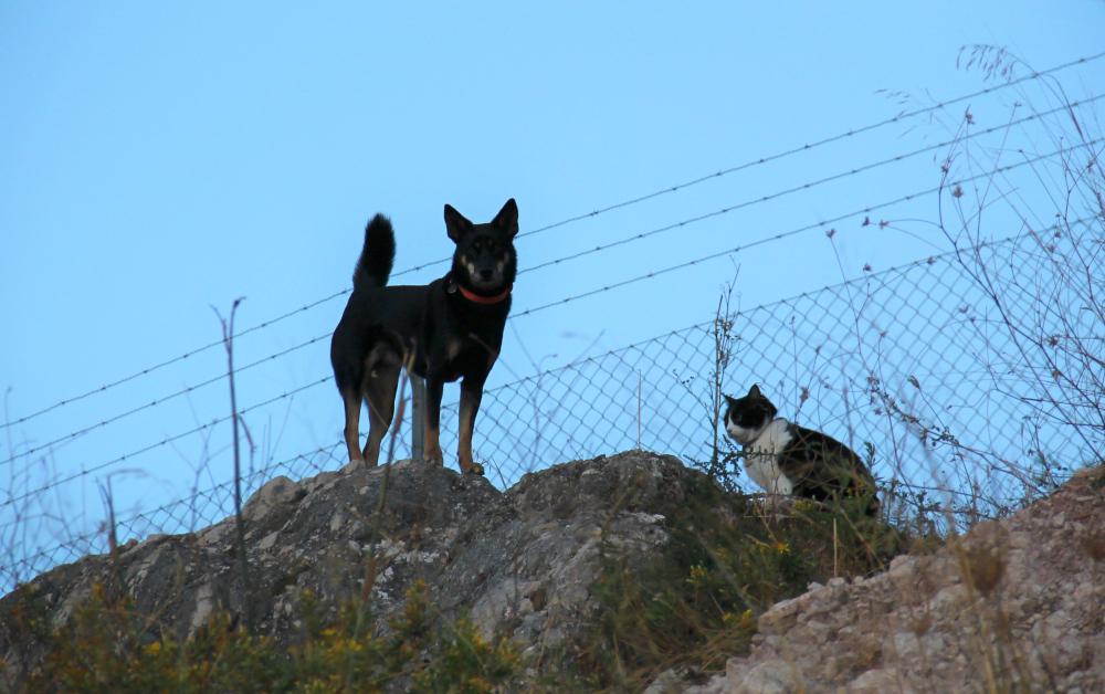 koira ja kissa kalliolla